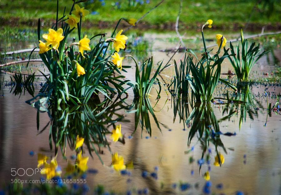 April: the emerging joy.