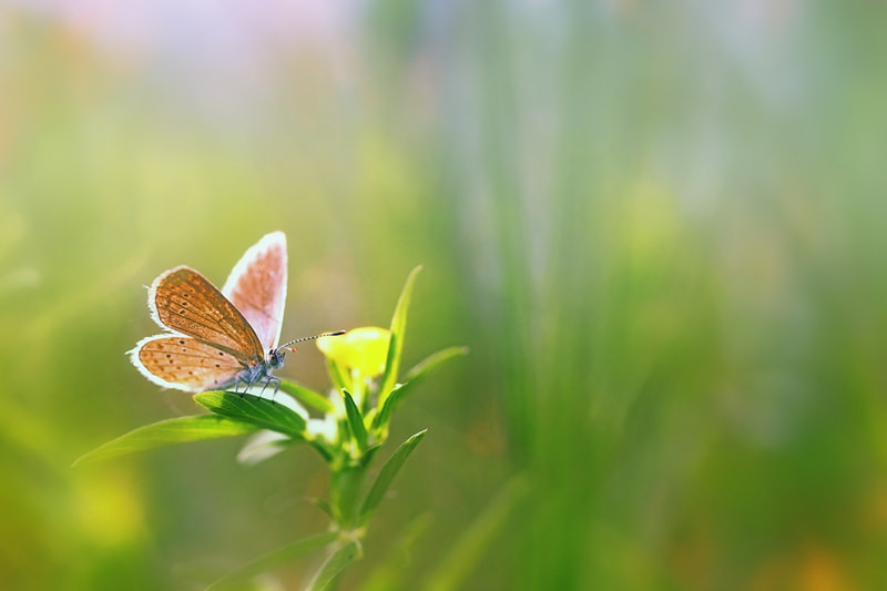 Photograph Sunbathe by Anan Suphap on 500px