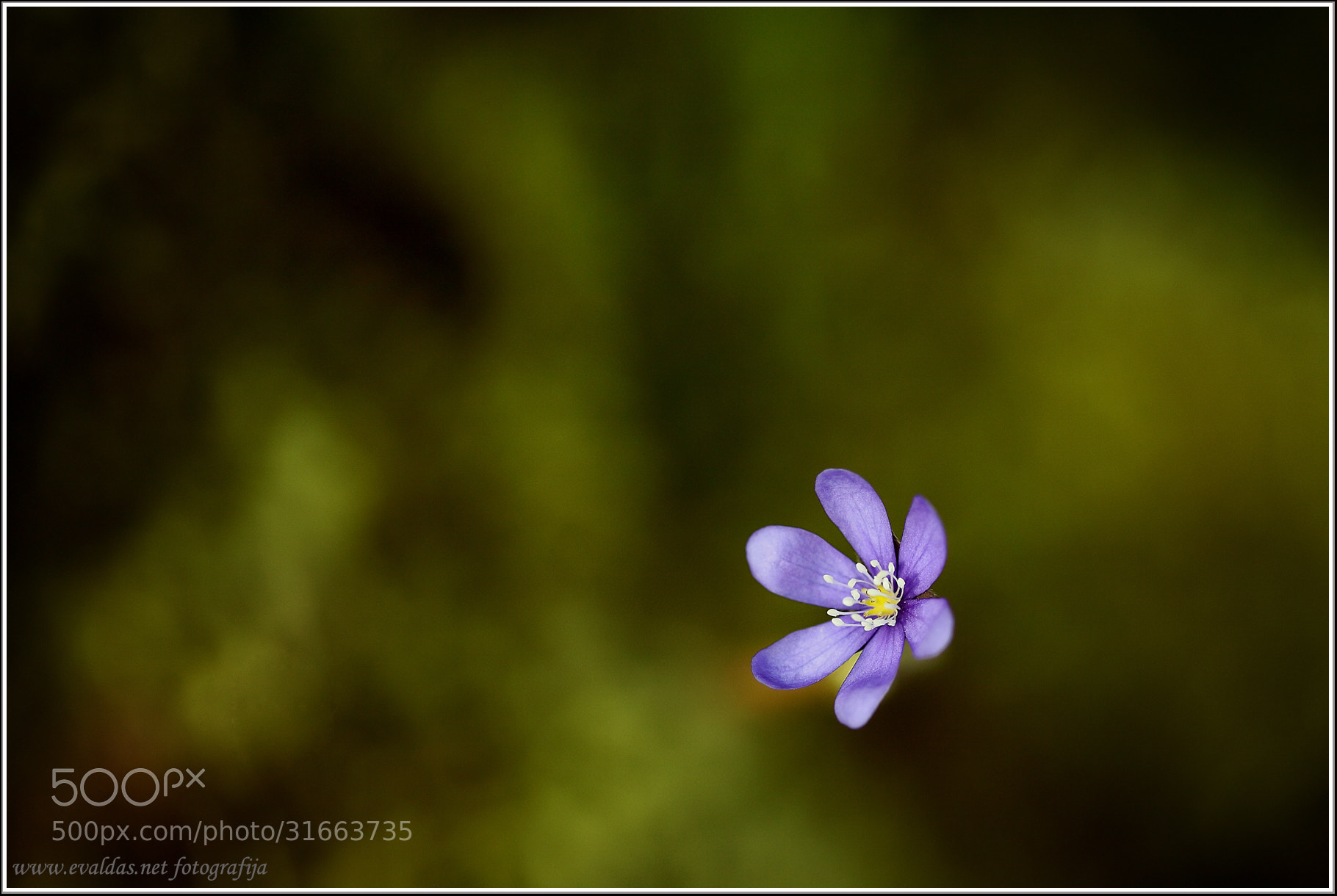 Photograph Violet by Evaldas Steinbergas on 500px