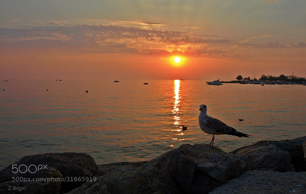 Photograph a birds at sunset  ! by Zeki Bilgin on 500px
