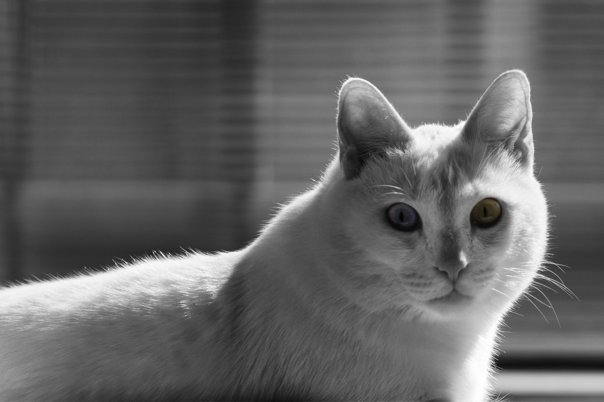 Photograph Different eyes by Daniele Sangiorgio on 500px