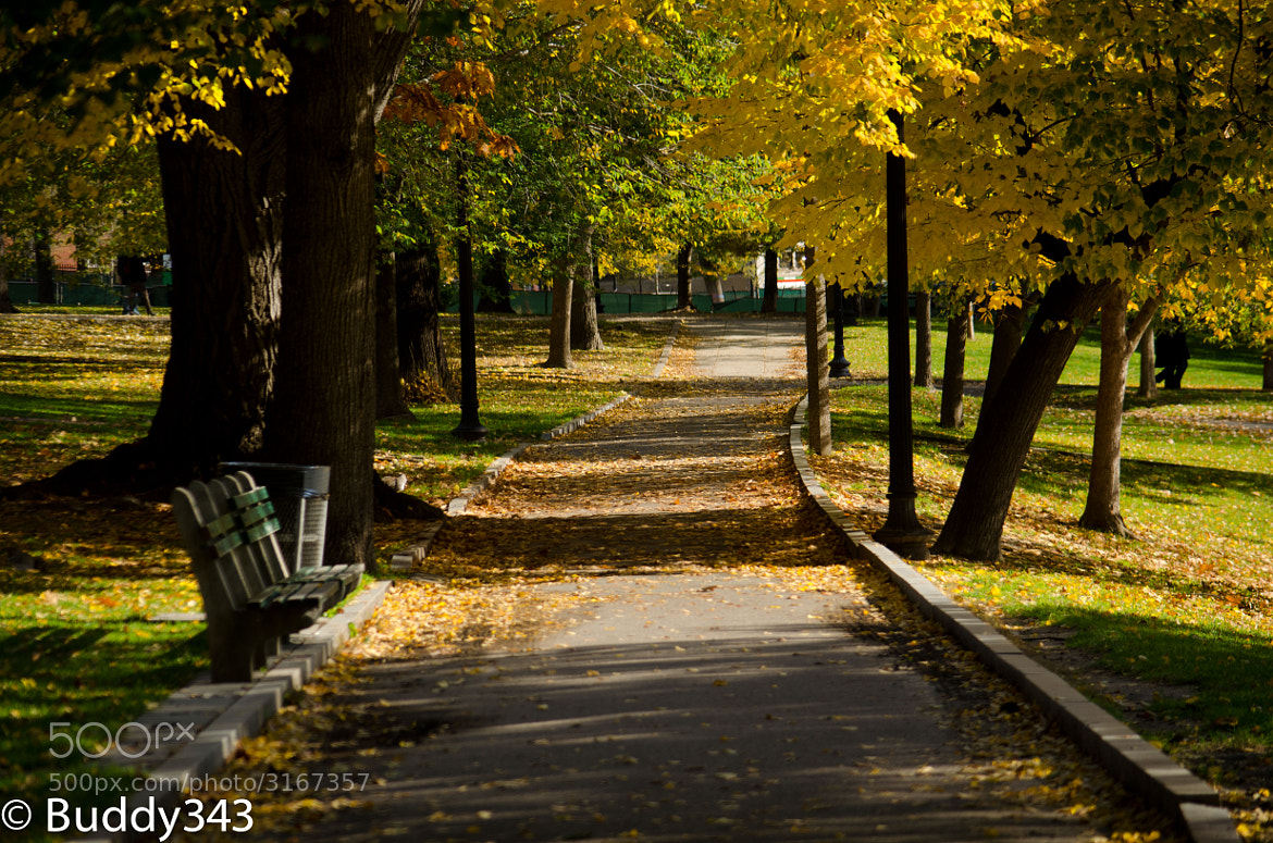 Photograph Common Path by Buddy 343 on 500px