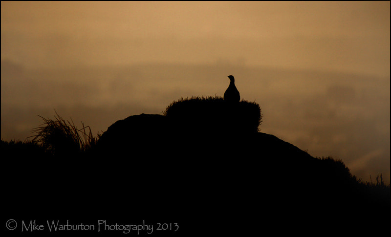 Photograph `Solitude` by Mike Warburton on 500px
