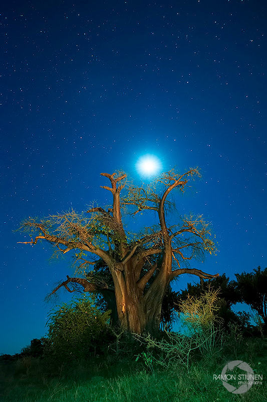 Photograph Baobab night by Ramon Stijnen on 500px