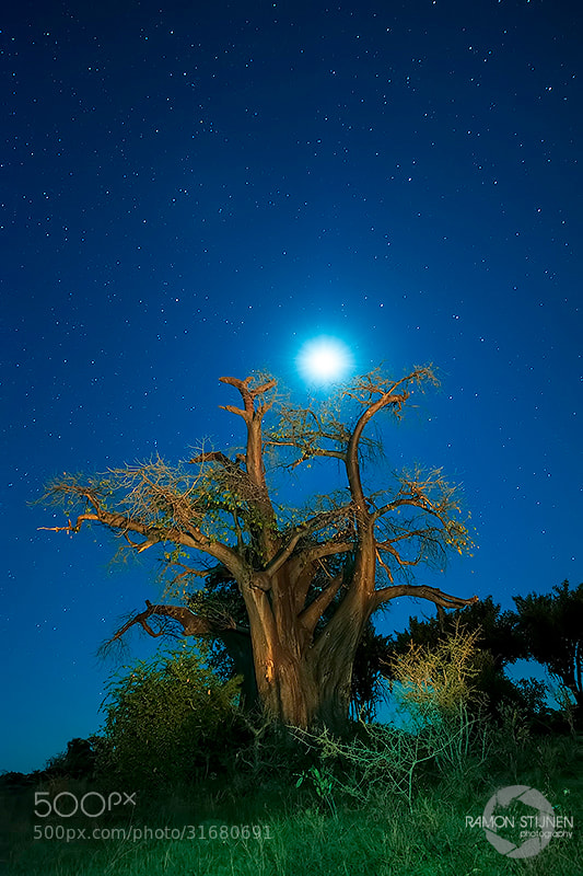 Photograph Baobab night by Ramon Stijnen on 500px