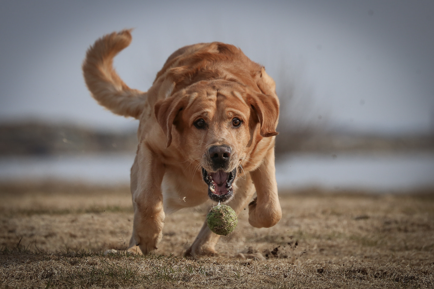 Photograph Fetch! by Fredrik Palm on 500px