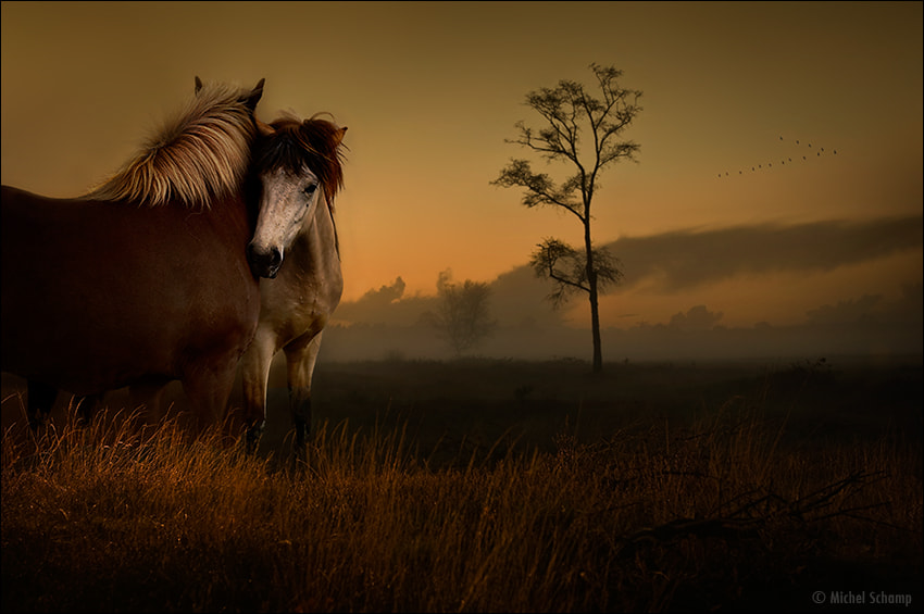 Photograph The Homelands  by Michel Schamp on 500px