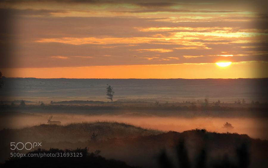 Photograph Dutch Heathland Daybreak by B Timmer on 500px