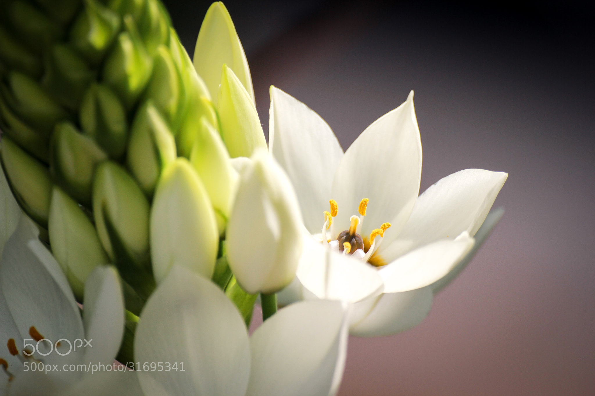 Photograph Purity by Ofer Perl on 500px