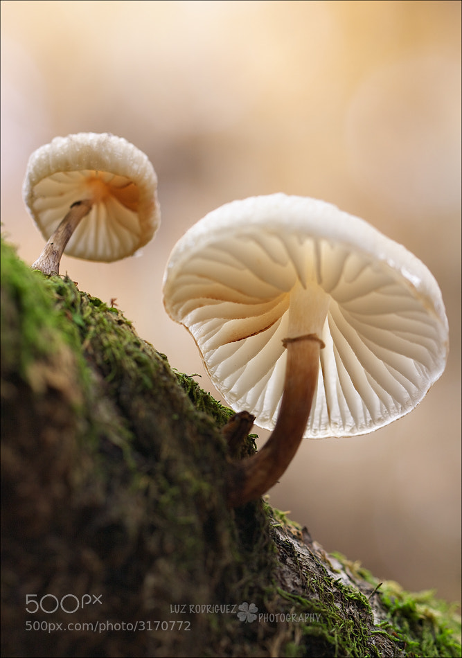 Photograph Mushrooms by Luz Rodríguez  on 500px