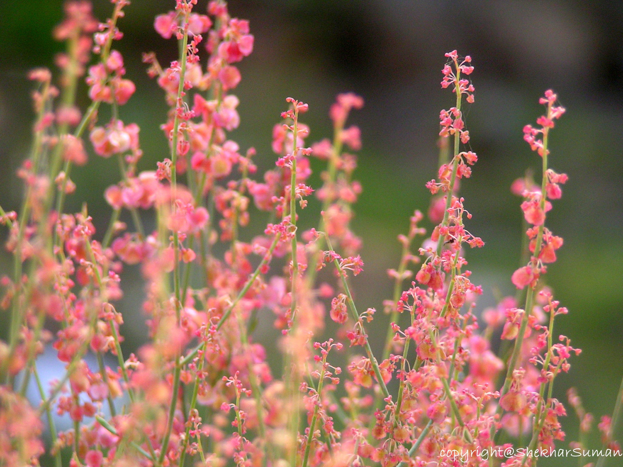 Photograph weeds.! by Shekhar Suman on 500px