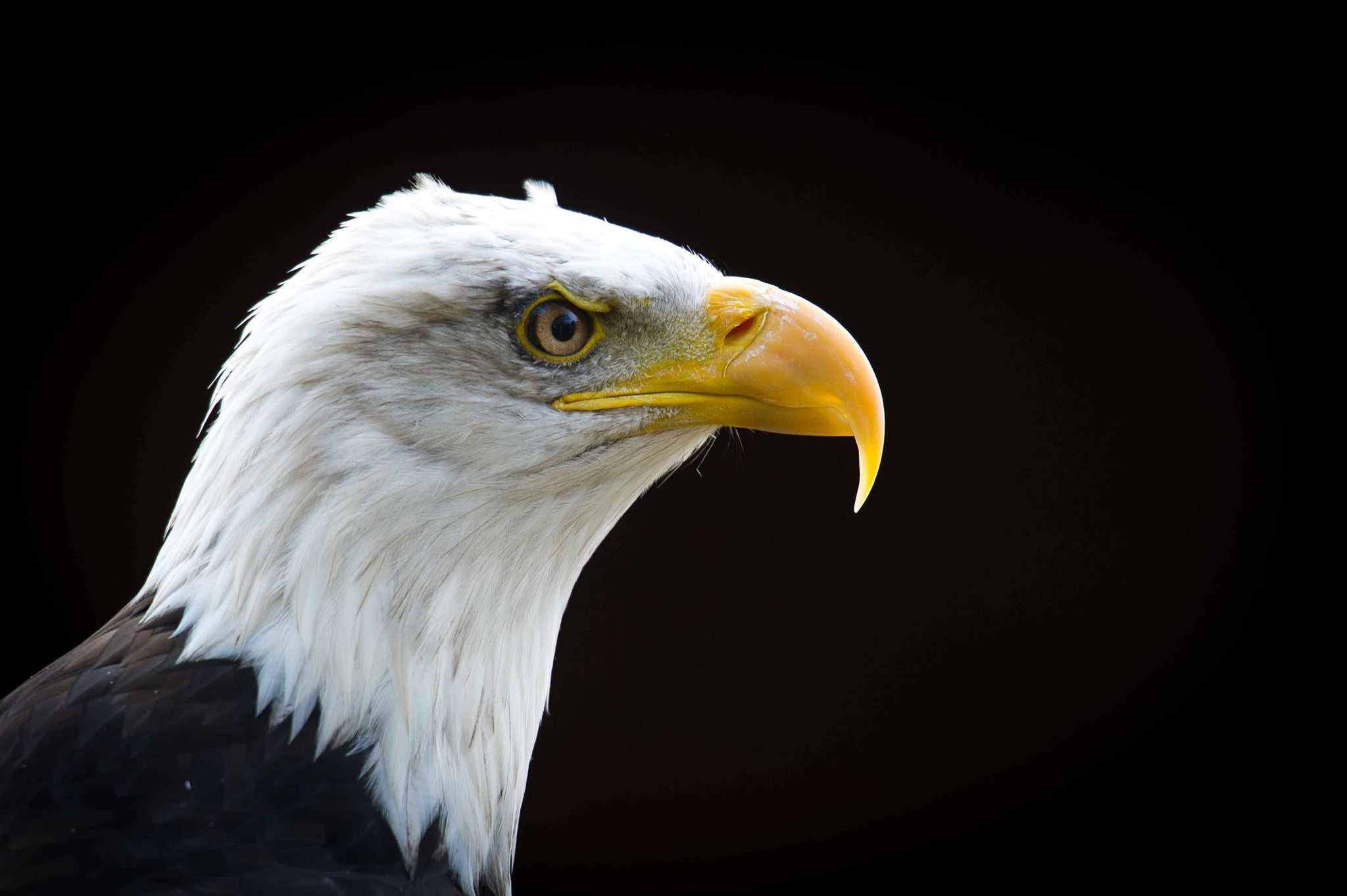 Photograph Eagle by Mauri  on 500px