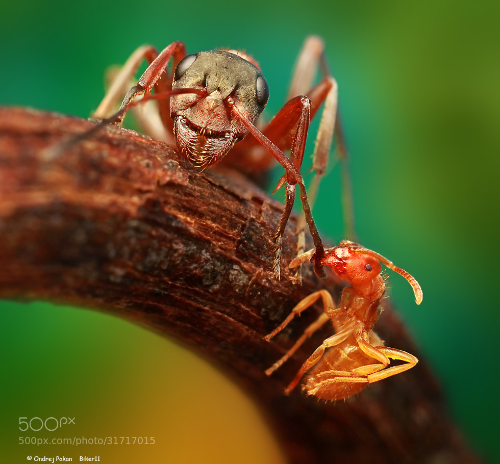 Photograph After attack by Ondrej Pakan on 500px