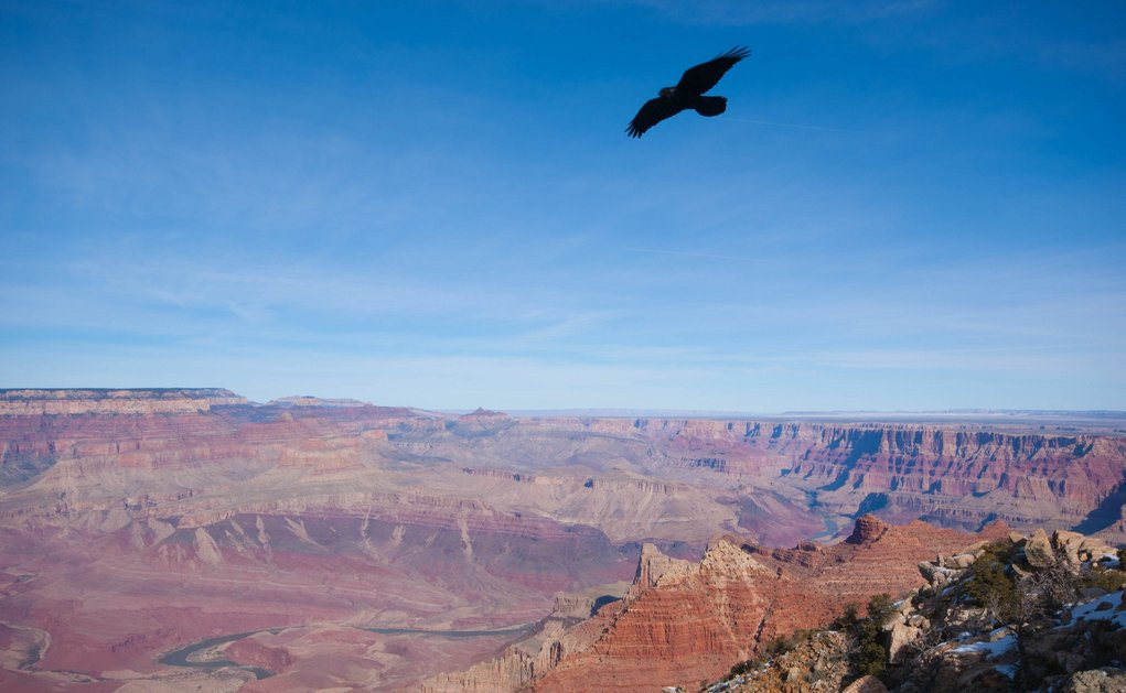 Photograph Soaring over Grand Canyon by lindamchan on 500px