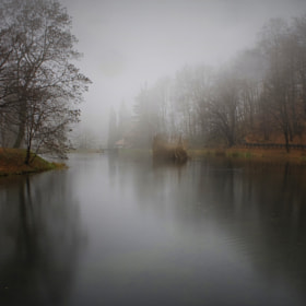 Foggy Lake 0541