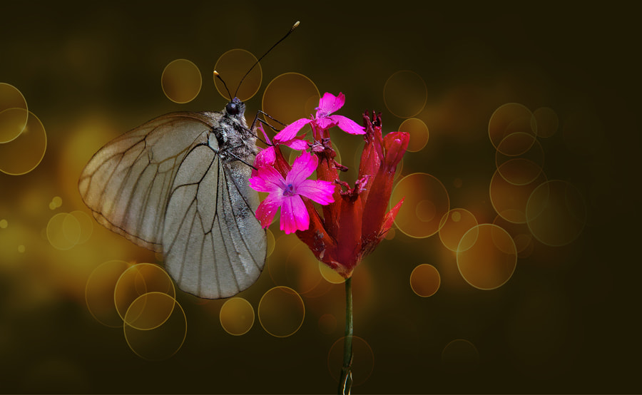 Photograph Butterfly effect - VII by Necat ÇETİN on 500px