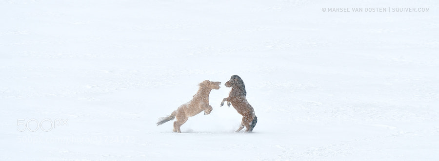 Photograph Fight Club by Marsel van Oosten on 500px