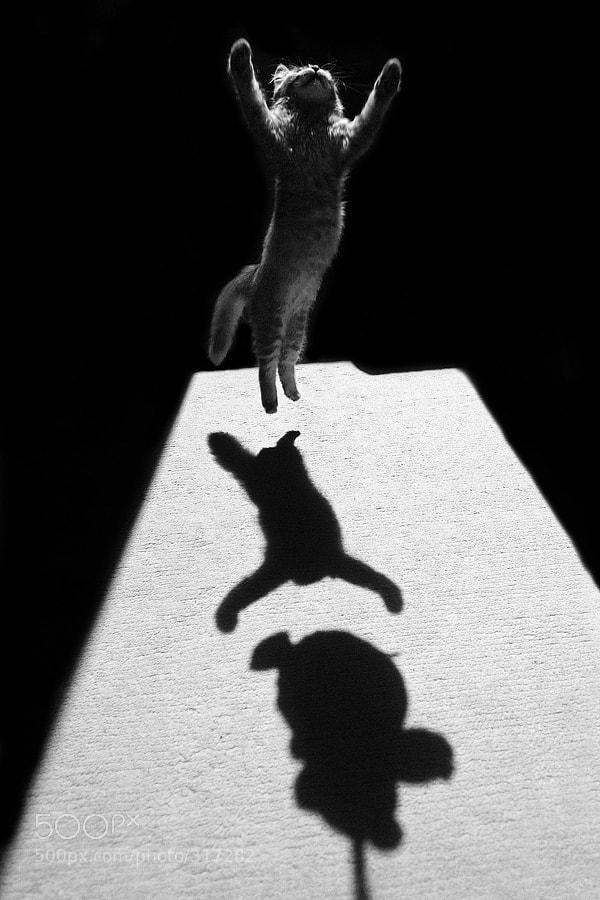 Photograph Edgar the great by Jure Kravanja on 500px