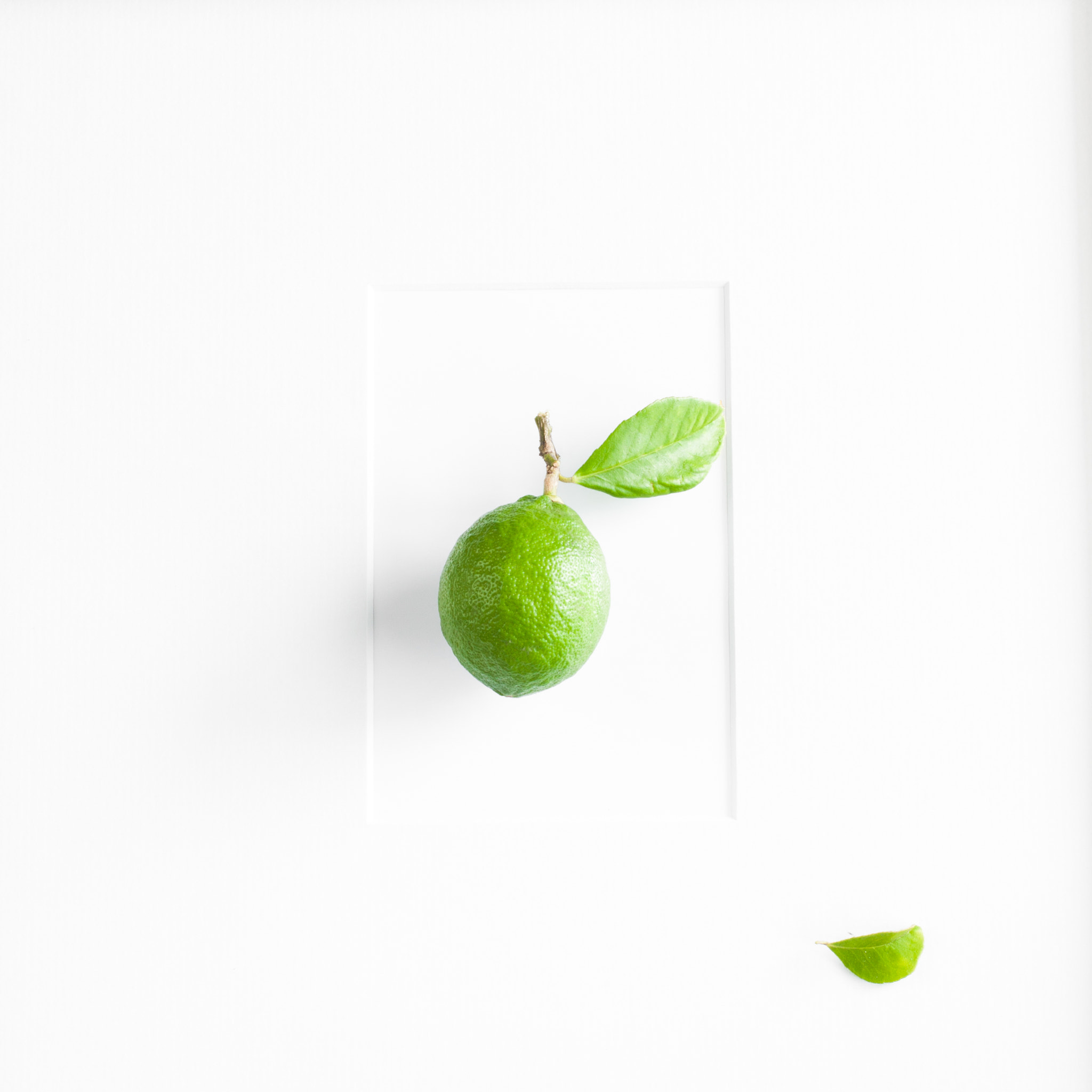 Photograph A Green Lemon - Framed by Constance Fein Harding on 500px