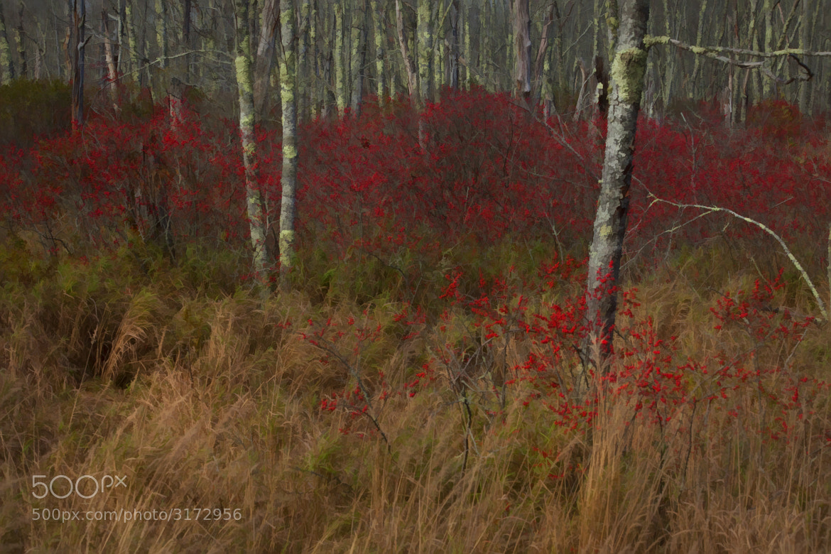 Photograph The Berry Forest by Zoe Theberge on 500px