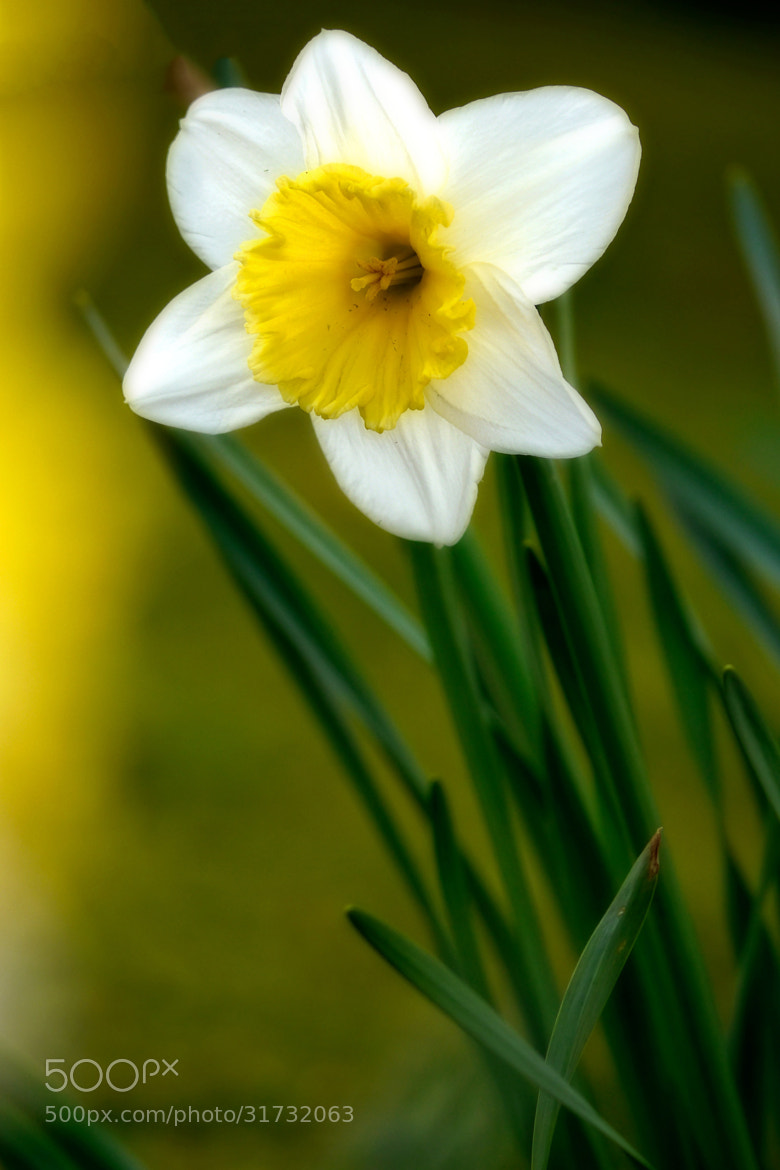 Photograph Springtime by John Purchase on 500px