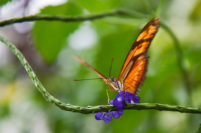 Photograph Fly buttlerfly fly! by Maximilian Pilz on 500px