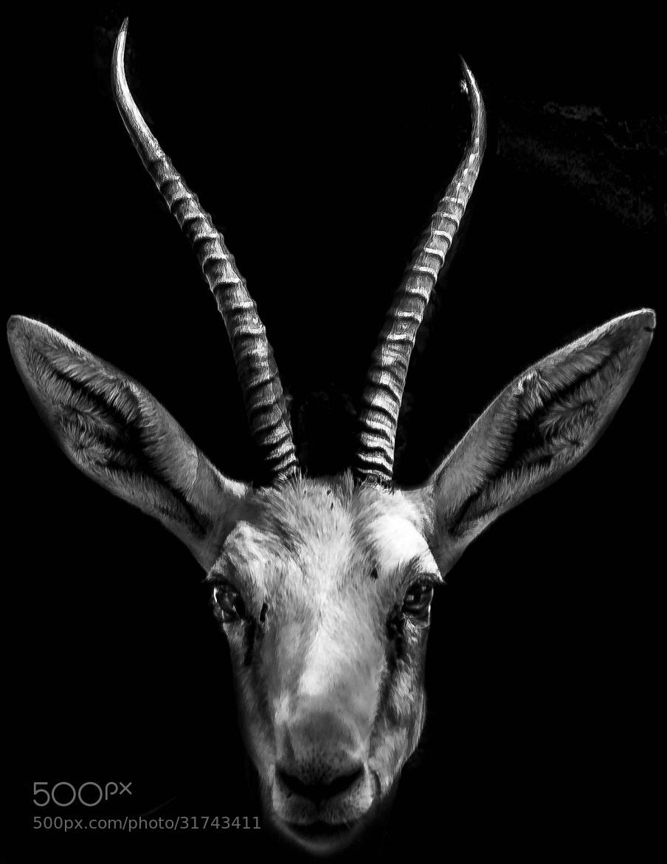 Photograph The Gazelle by julian john on 500px