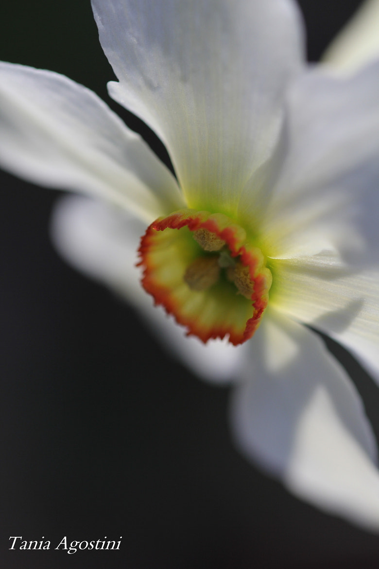 Photograph Narciso  by Tania Agostini on 500px