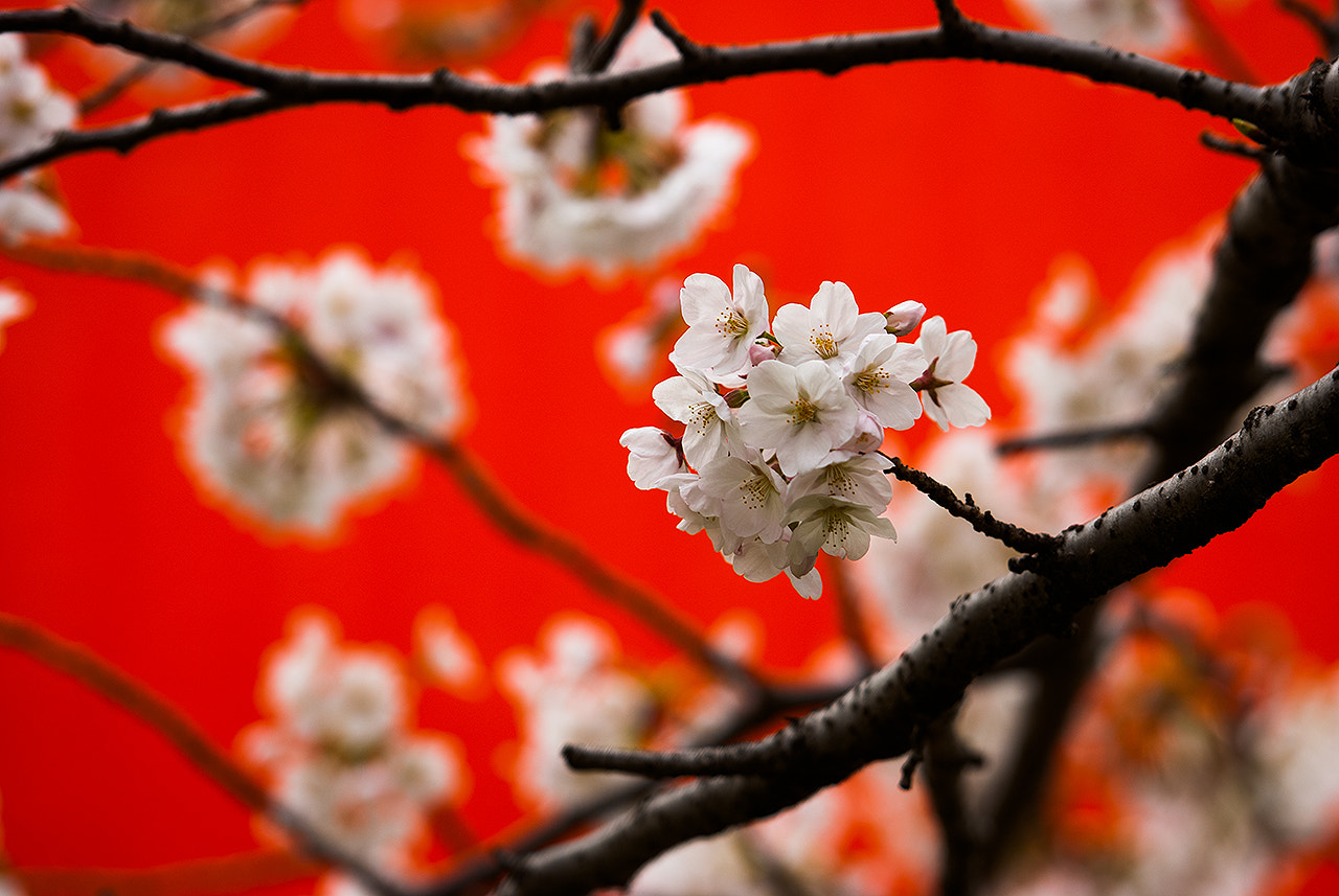 Photograph Spring by LEE GEON on 500px