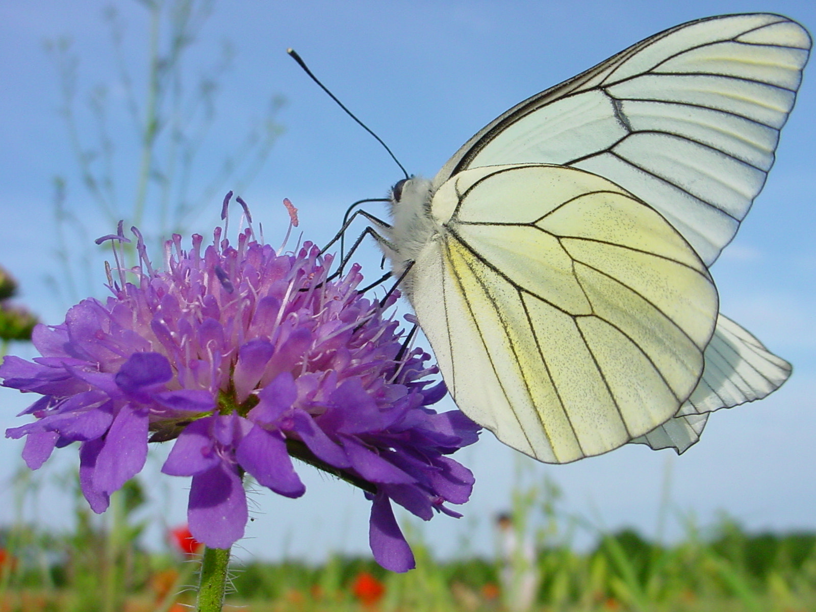 Photograph Beauty Queen Butterfly by Bruno Meunier on 500px