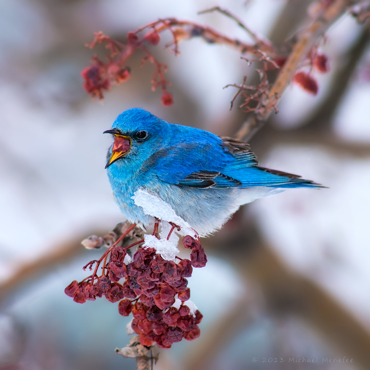 Photograph Blue Berry Blizzard by Michael Menefee on 500px