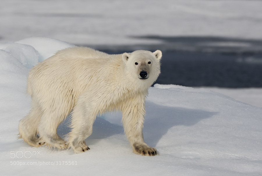 """Taken on a """"sunny"""" day somewhere in Svalbard, Norway"""