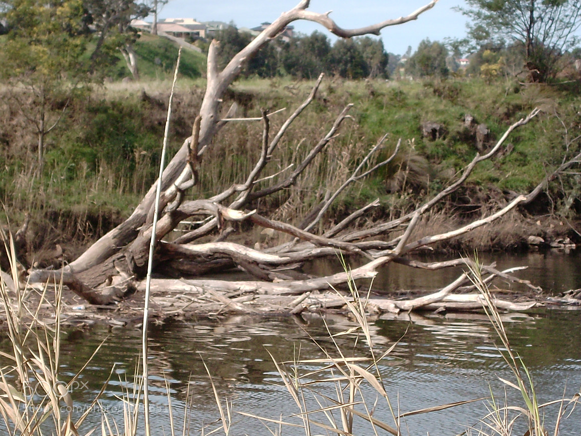 Photograph After Bairnsdale floods by lynnieliz on 500px
