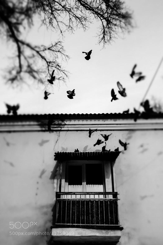 Photograph window into the courtyard by Dmitrii Gorlov on 500px
