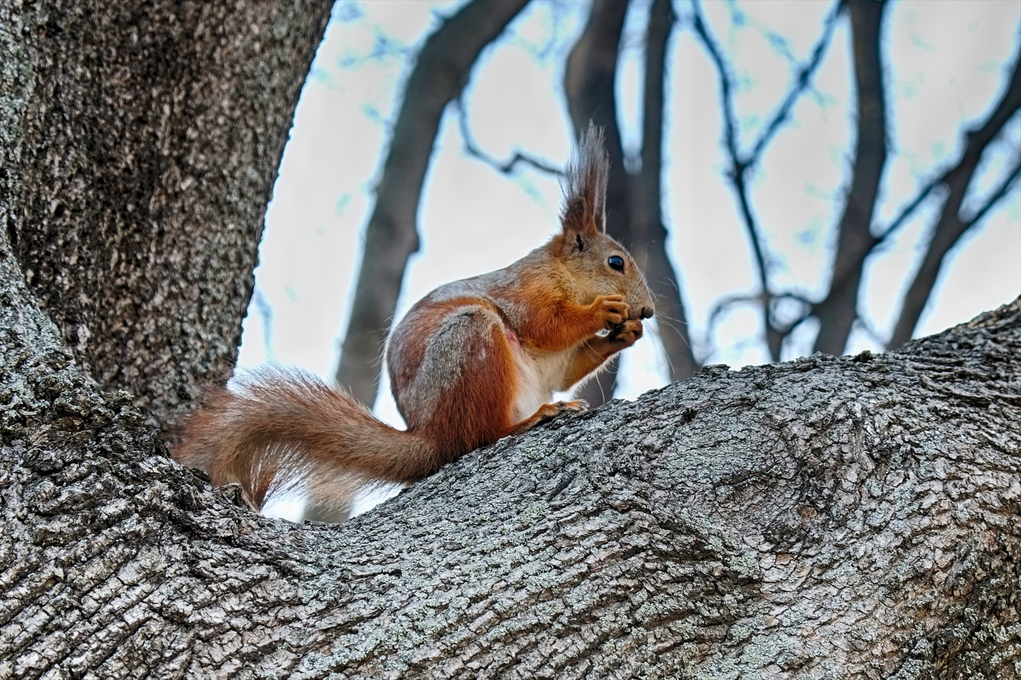 Photograph Squirrel by world_image on 500px