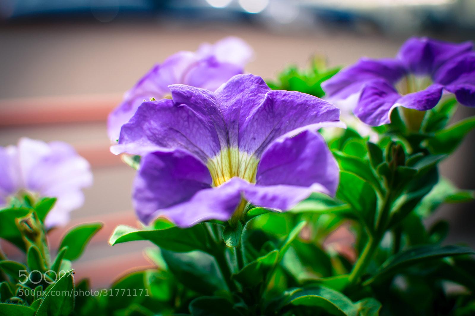 Photograph Purplec by Yane Naumoski on 500px