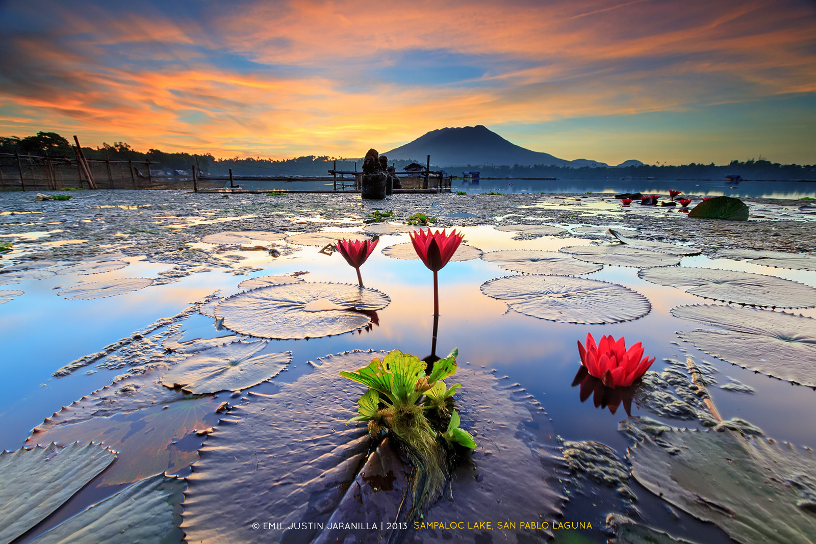 Photograph Lilies and Lotus by Emil Justin Jaranilla on 500px