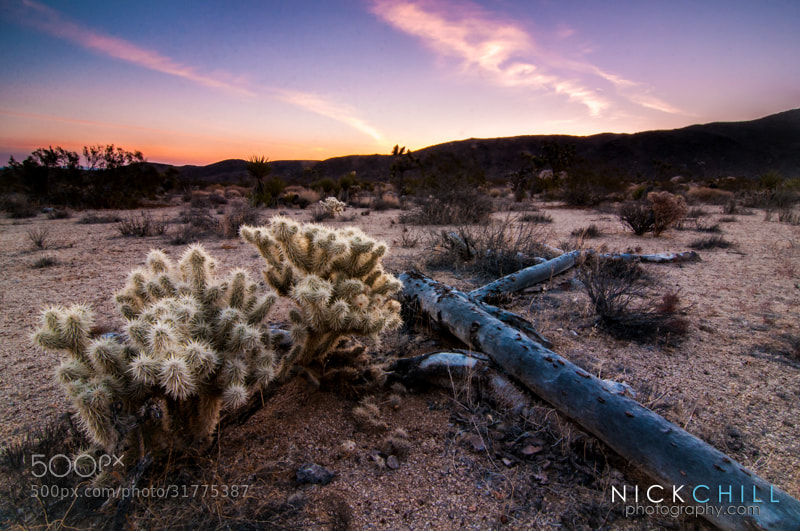 Photograph Desert Sunrise by Nick Chill on 500px