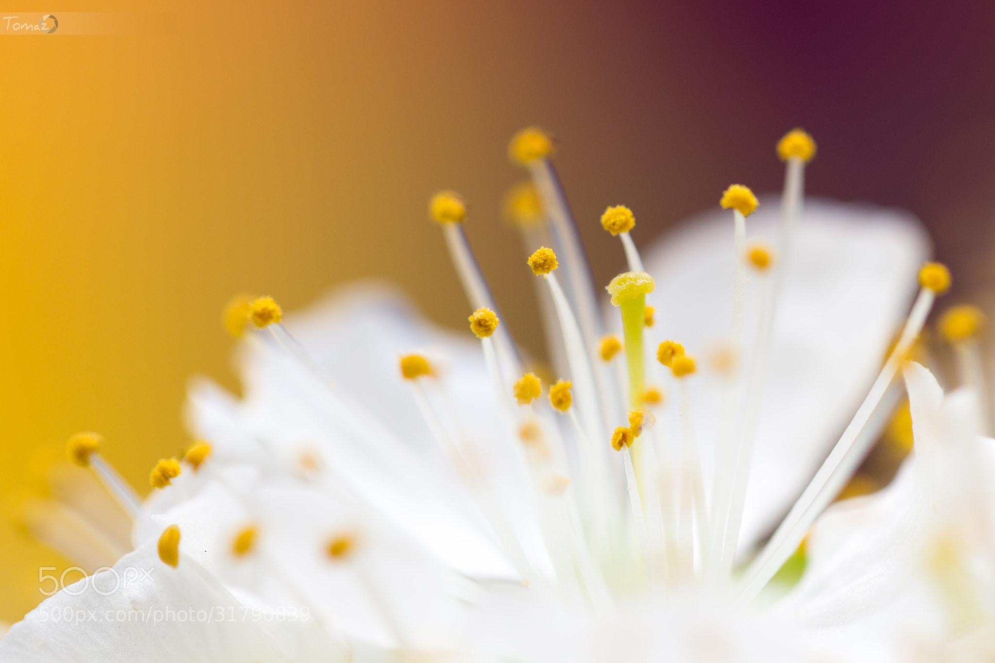 Photograph Spring by Tomaž Klemenšak on 500px