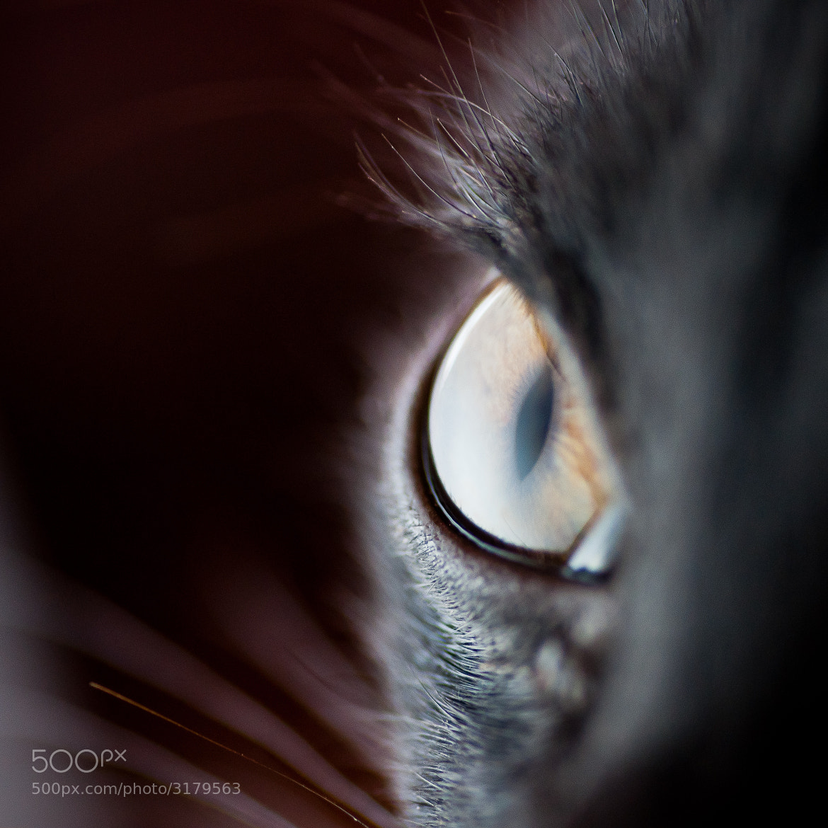 Photograph Kitten eye by David Cornejo on 500px