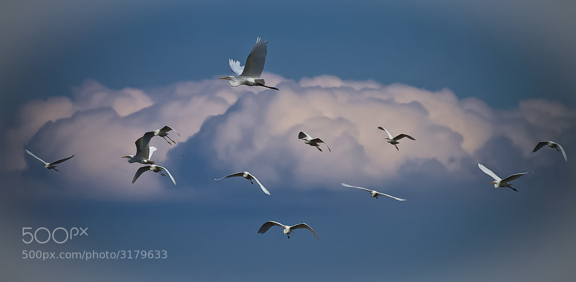 Photograph Crowded Airspace by Lee Miller on 500px