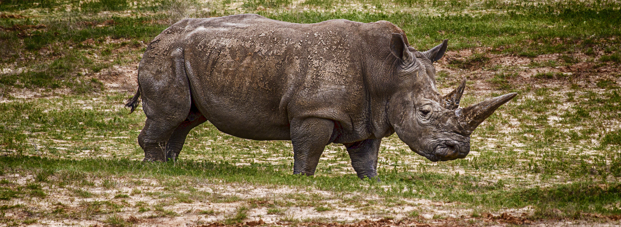 Photograph Mighty Rhino by John Mead on 500px