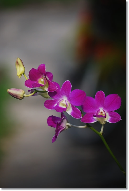 Photograph Violet orchids photo by T K on 500px