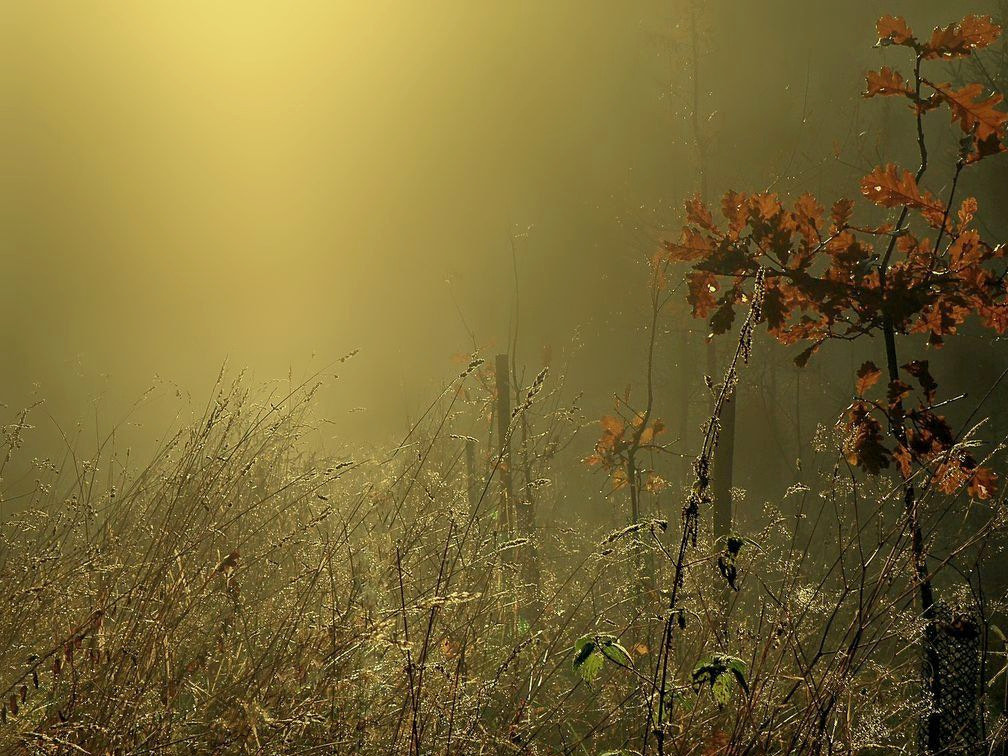 Photograph  Mysterious light by **  REgiNA  **  on 500px