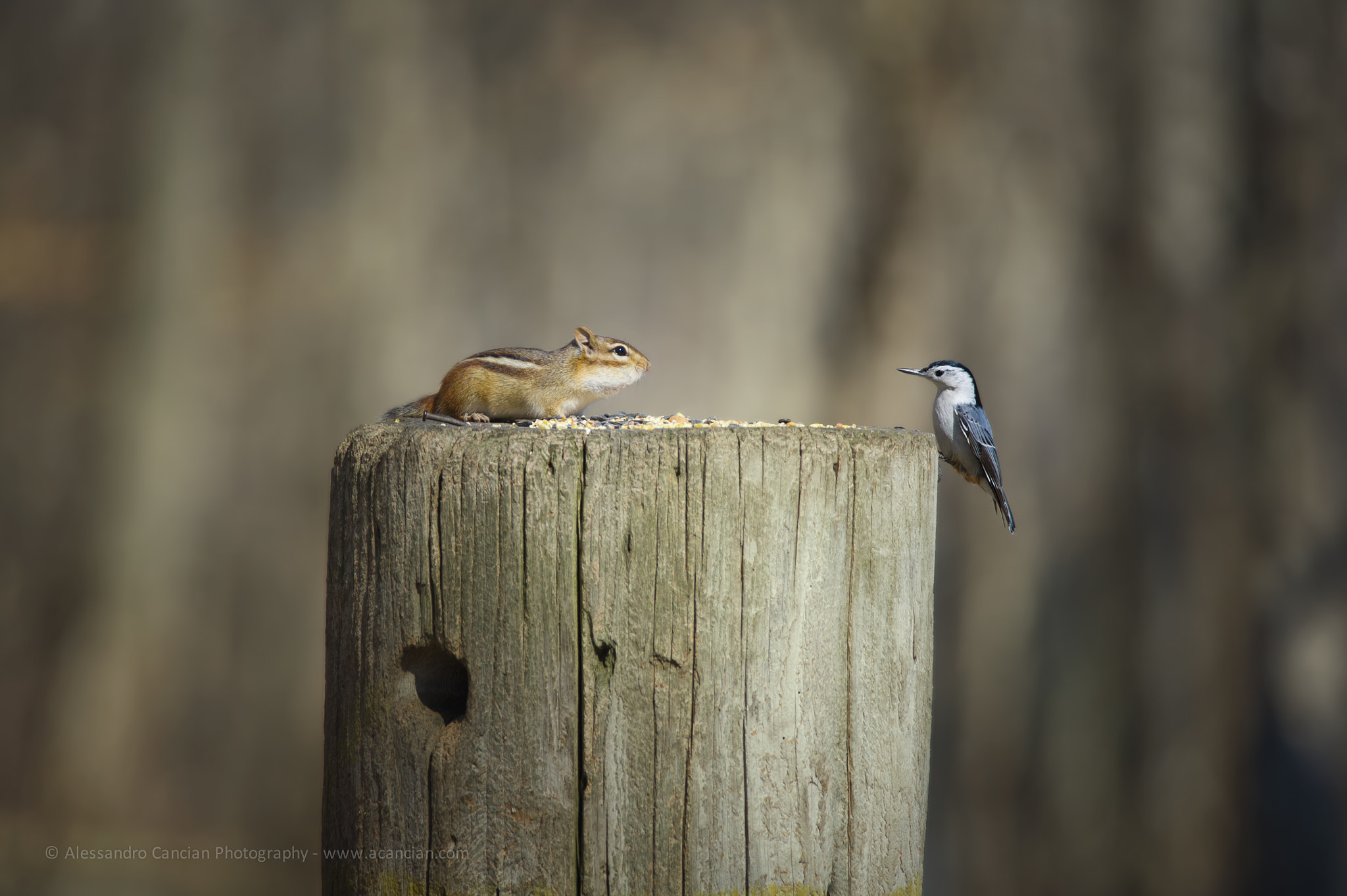Photograph Stand off! by Alessandro Cancian on 500px