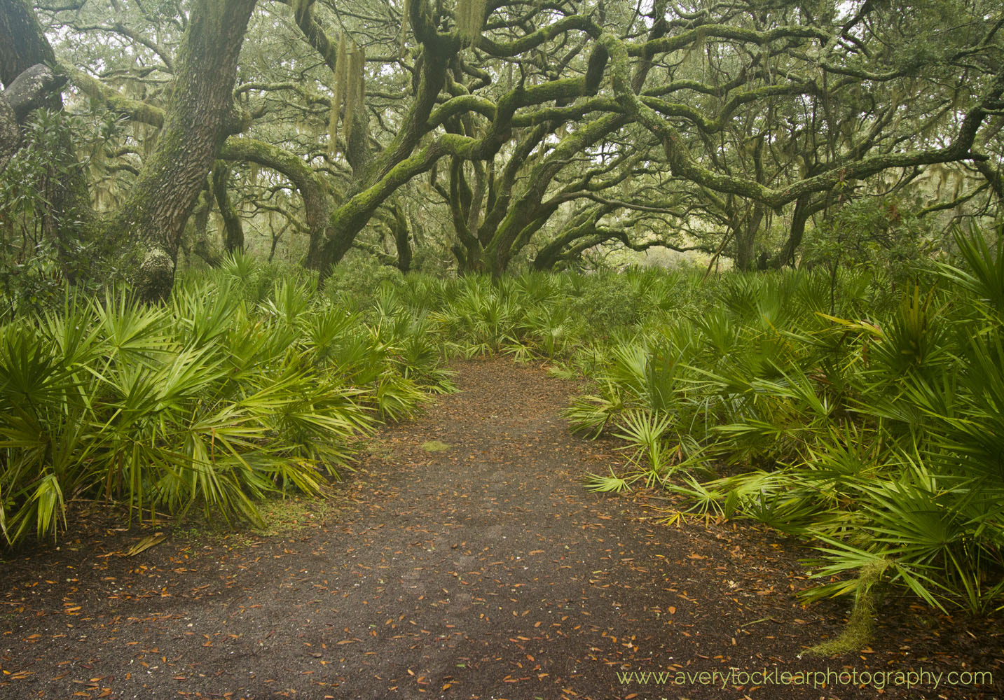 Photograph Lush Maritime Forest by Avery Locklear on 500px