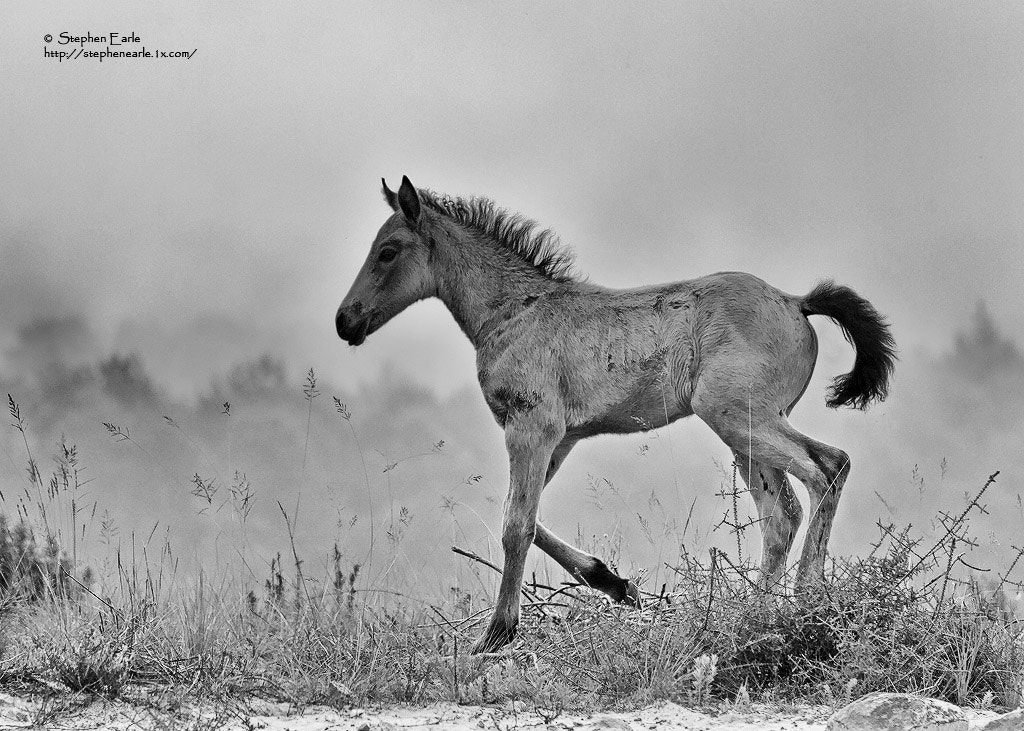 Photograph Wild horse by Stephen Earle on 500px