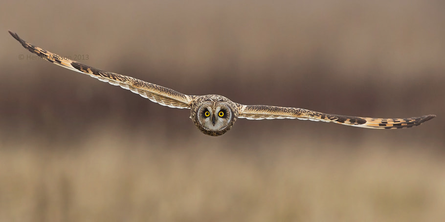 Photograph Eye Contact by Henrik Nilsson on 500px