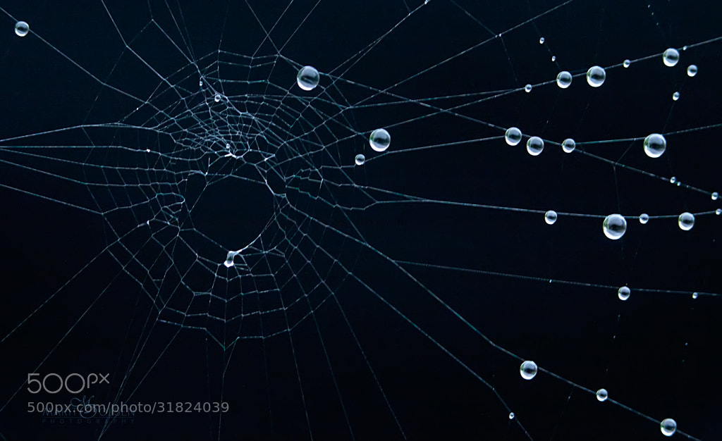 Photograph Spider web by Marit Olsen on 500px