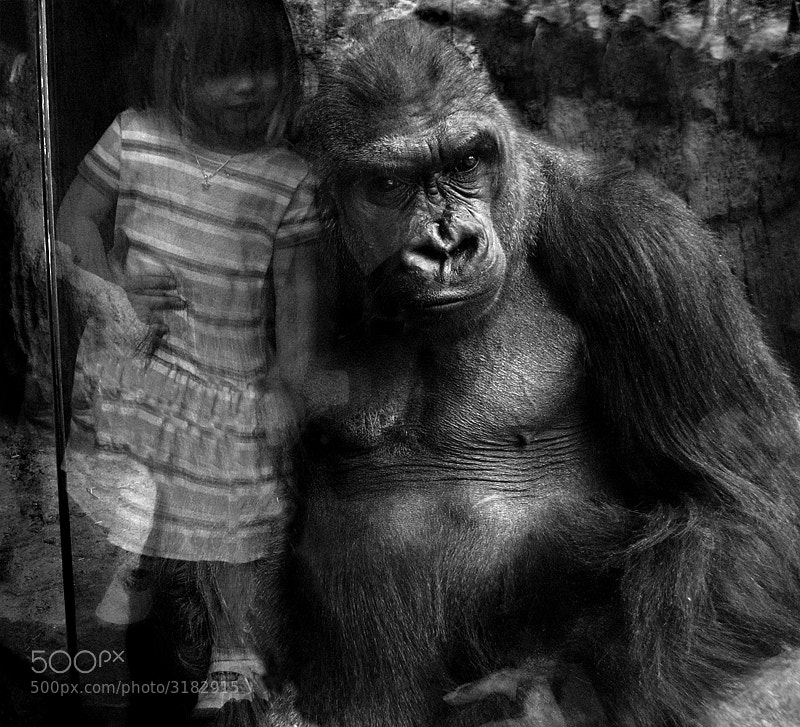 Photograph KING KONG by shlomi nissim on 500px